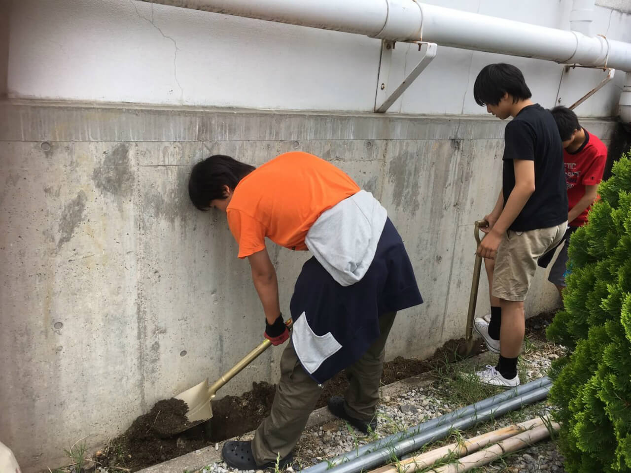 2019612 草刈り 苗植え_190612_0003